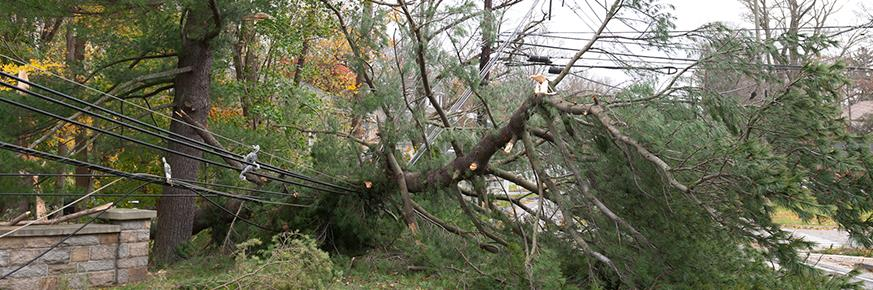 A fallen tree next to power lines